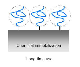 Immobilization of biomolecules Short time -Physical