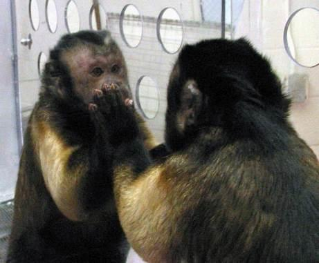 Central banker (analyzing the yield curve) reminds me a monkey who for the first time has seen a mirror.