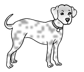 1.1. Which is Tina s dog? A. B. C. Transkrypcja: Woman: Hi Mike! It s Tina. You won t believe it but I ve got a dog. I called him Spotty because he s all white with a big black spot on his head.