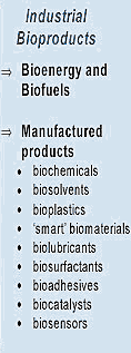 The Business of Bioproducts Projekt UDA-POKL.04.01.