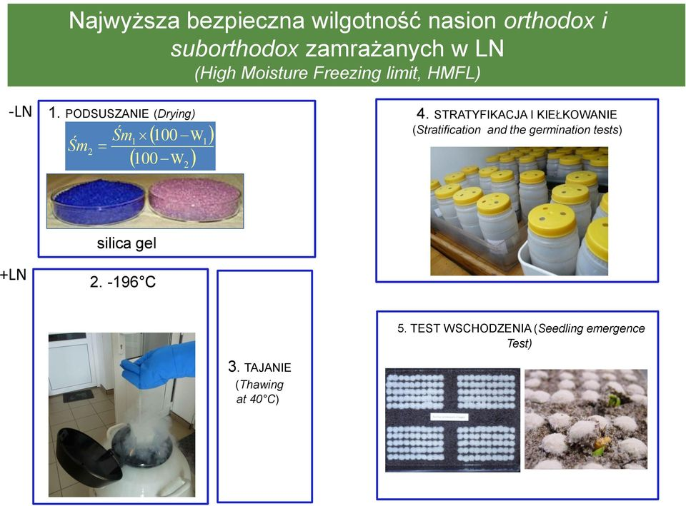STRATYFIKACJA I KIEŁKOWANIE (Stratification and the germination tests) +LN silica gel