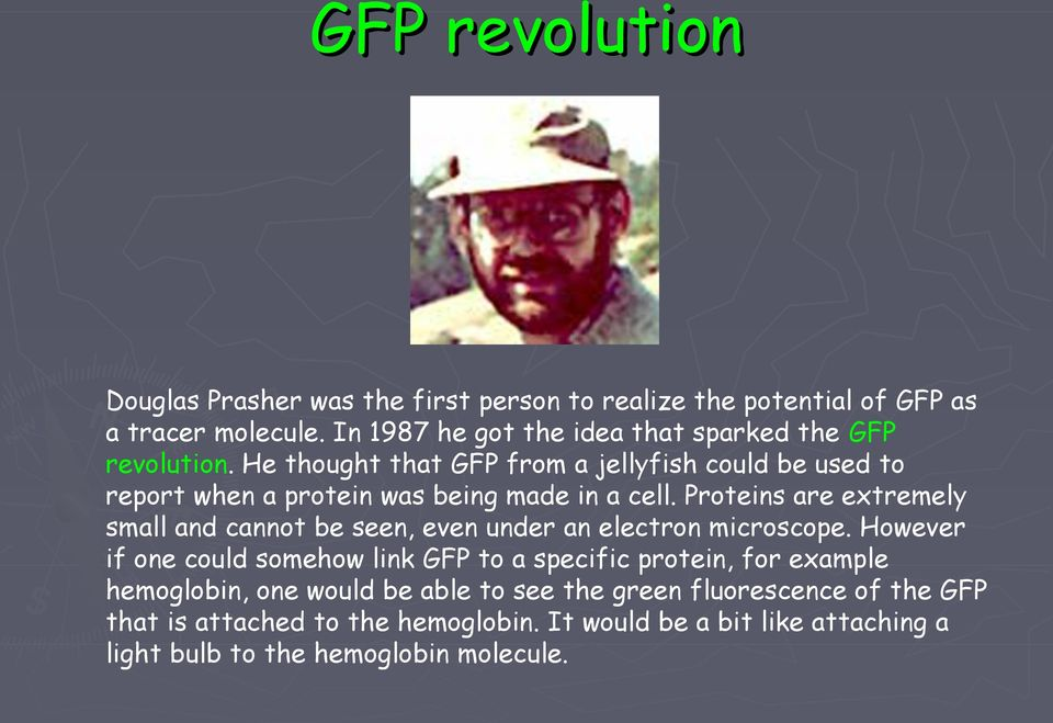 He thought that GFP from a jellyfish could be used to report when a protein was being made in a cell.