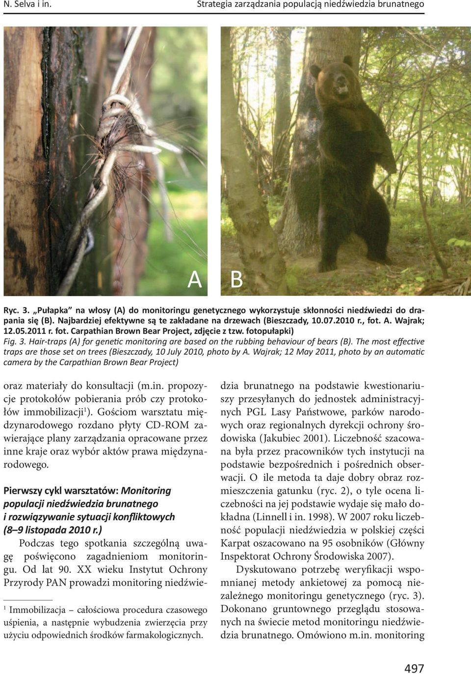 Hair-traps (A) for gene c monitoring are based on the rubbing behaviour of bears (B). The most effec ve traps are those set on trees (Bieszczady, 10 July 2010, photo by A.