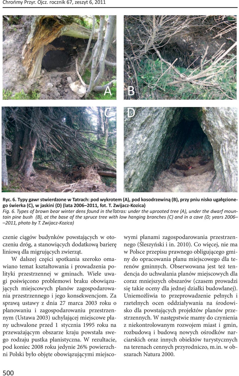 Types of brown bear winter dens found in thetatras: under the uprooted tree (A), under the dwarf mountain pine bush (B), at the base of the spruce tree with low hanging branches (C) and in a cave (D;