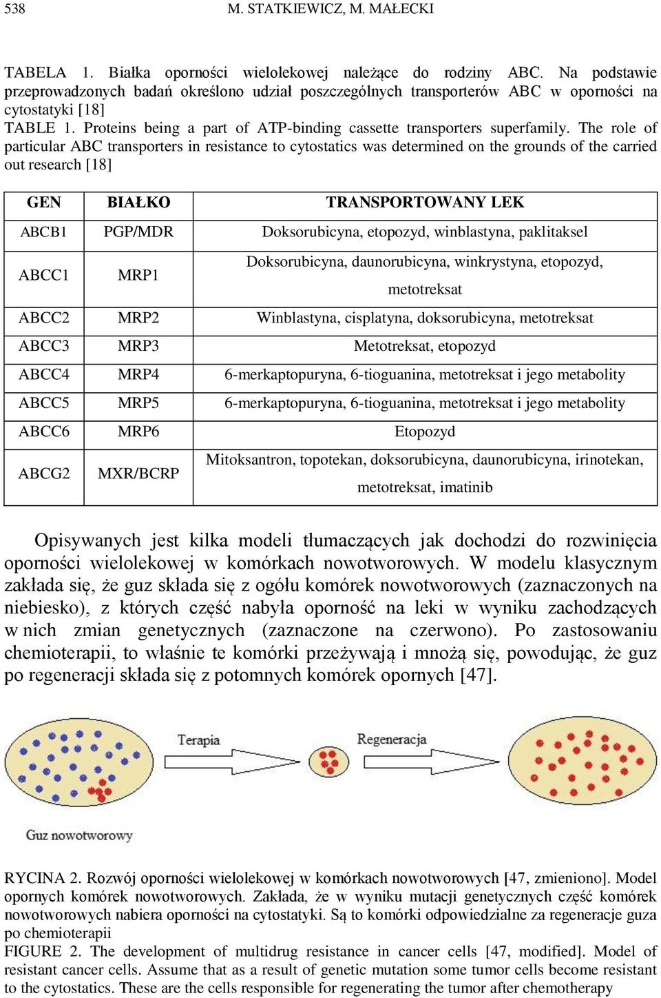 The role of particular ABC transporters in resistance to cytostatics was determined on the grounds of the carried out research [18] GEN BIAŁKO TRANSPORTOWANY LEK ABCB1 PGP/MDR Doksorubicyna,
