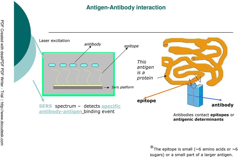 protein epitope antibody Antibodies contact epitopes or antigenic determinants