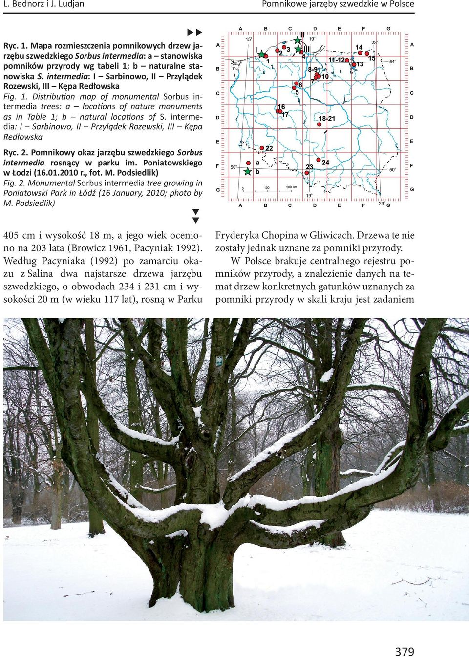 intermedia: I Sarbinowo, II Przylądek Rozewski, III Kępa Redłowska Fig. 1. Distribu on map of monumental Sorbus intermedia trees: a loca ons of nature monuments as in Table 1; b natural loca ons of S.