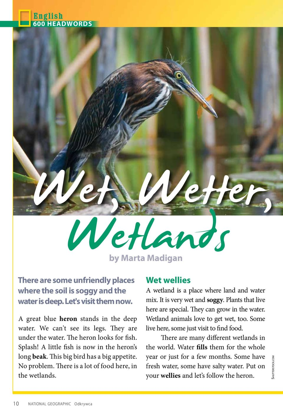 There is a lot of food here, in the wetlands. Wet wellies A wetland is a place where land and water mix. It is very wet and soggy. Plants that live here are special. They can grow in the water.