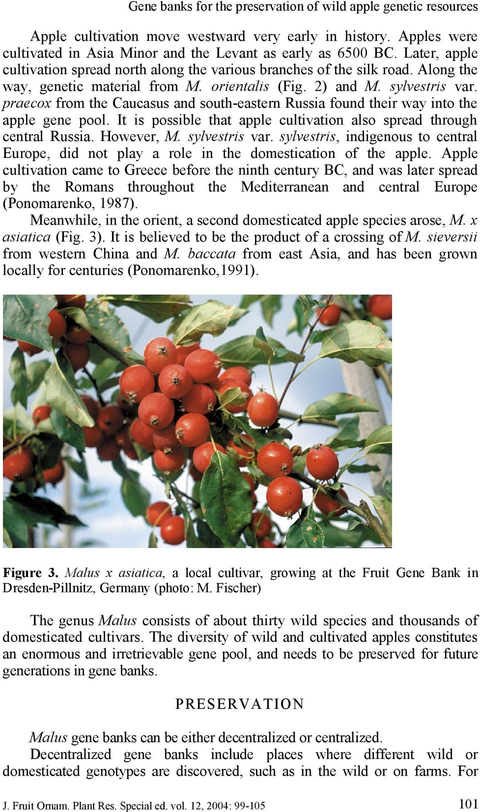 praecox from the Caucasus and south eastern Russia found their way into the apple gene pool. It is possible that apple cultivation also spread through central Russia. However, M. sylvestris var.