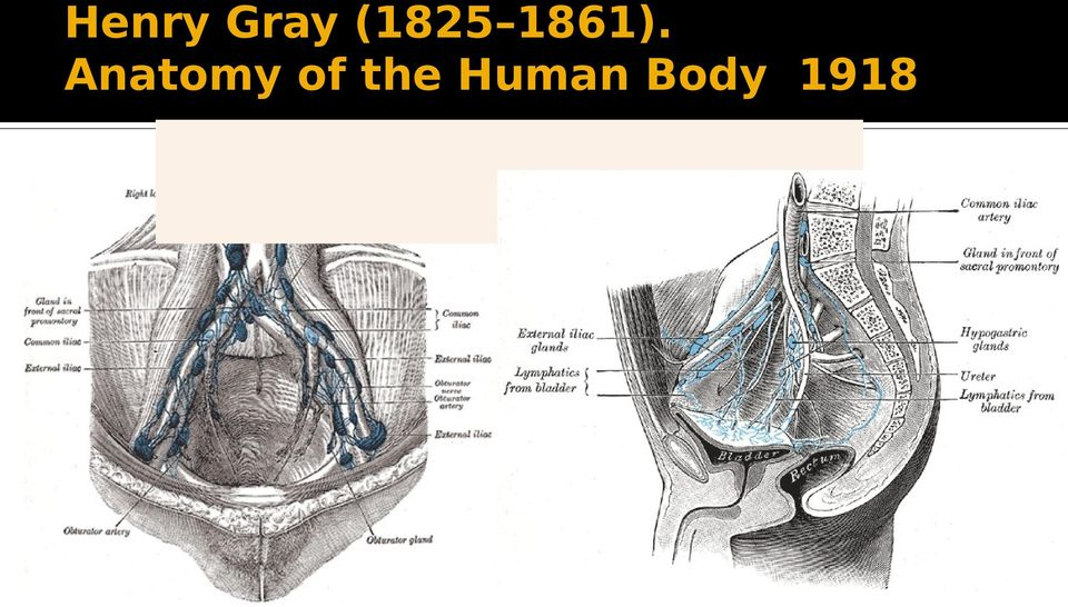 of the Human Body. 1918.