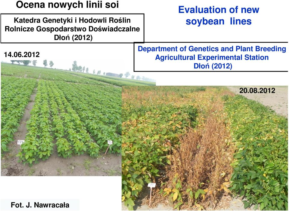 2012 Evaluation of new soybean lines Department of Genetics and