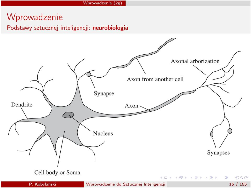 Dendrite Axon Nucleus Synapses Cell body or Soma P.