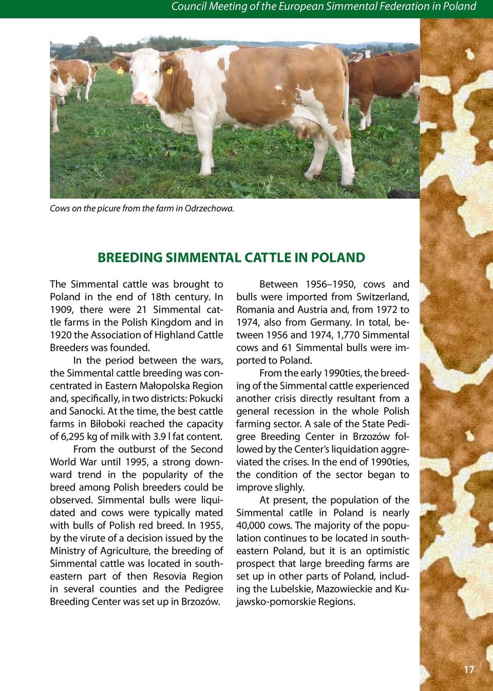 In 1909, there were 21 Simmental cattle farms in the Polish Kingdom and in 1920 the Association of Highland Cattle Breeders was founded.