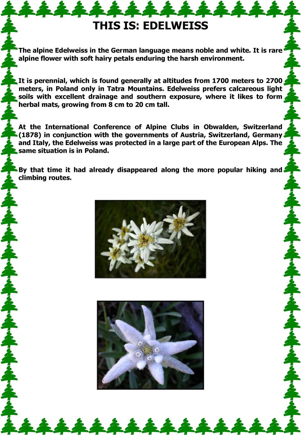 Edelweiss prefers calcareous light soils with excellent drainage and southern exposure, where it likes to form herbal mats, growing from 8 cm to 20 cm tall.