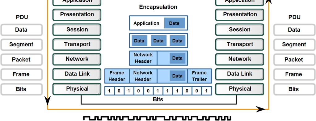 Physical Layer Protocols & Services Describe the role of bits in