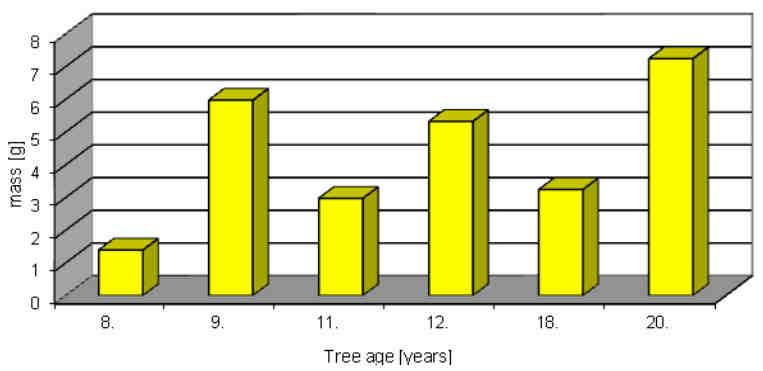 Model trees were selected according to the variation of their diameters (d 0 or d 1,3 ) so that they were representative for the whole population.