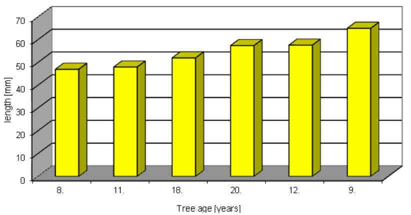 Diversity of needles of the Scots Pine (Pinus sylvestris L.) 549 The mean mass of 1000 pairs of needles was not related with the age of trees.