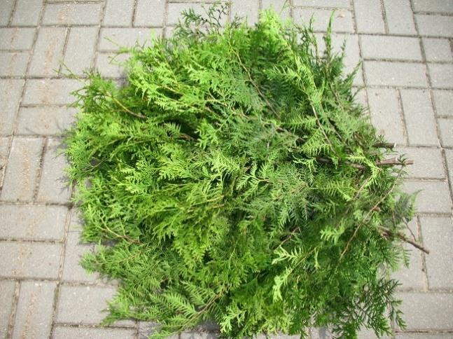 shrubs (spruce, cypress, thuja) available in 5kg packs.